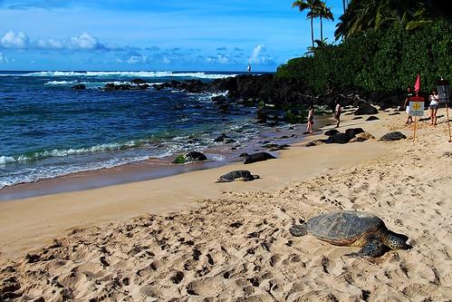 Hawaii 2014 371