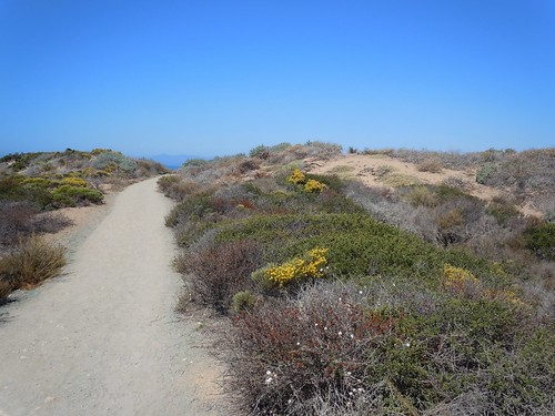 The Bluff Trail