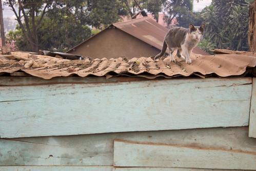 Rooftop cat in Kinawataka