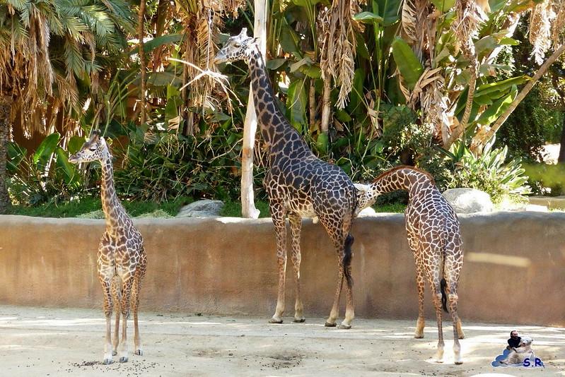 Los Angeles Zoo 111