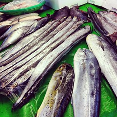 vegetable(0.0), mackerel(0.0), smoked fish(0.0), pacific saury(0.0), sauries(0.0), forage fish(0.0), bonito(0.0), cuisine(0.0), sardine(0.0), fish(1.0), fish(1.0), seafood(1.0), produce(1.0), food(1.0), shishamo(1.0),