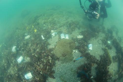三仙台基輩船澳東側測點隨處可見到沈積在海底的垃圾。(台灣珊瑚礁學會提供,鄭明修攝。)