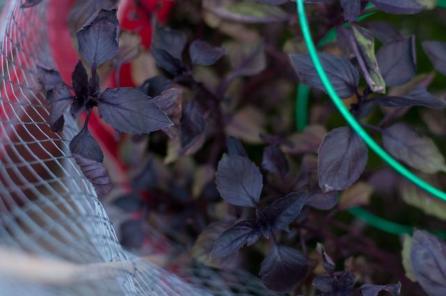 garden, october 19
