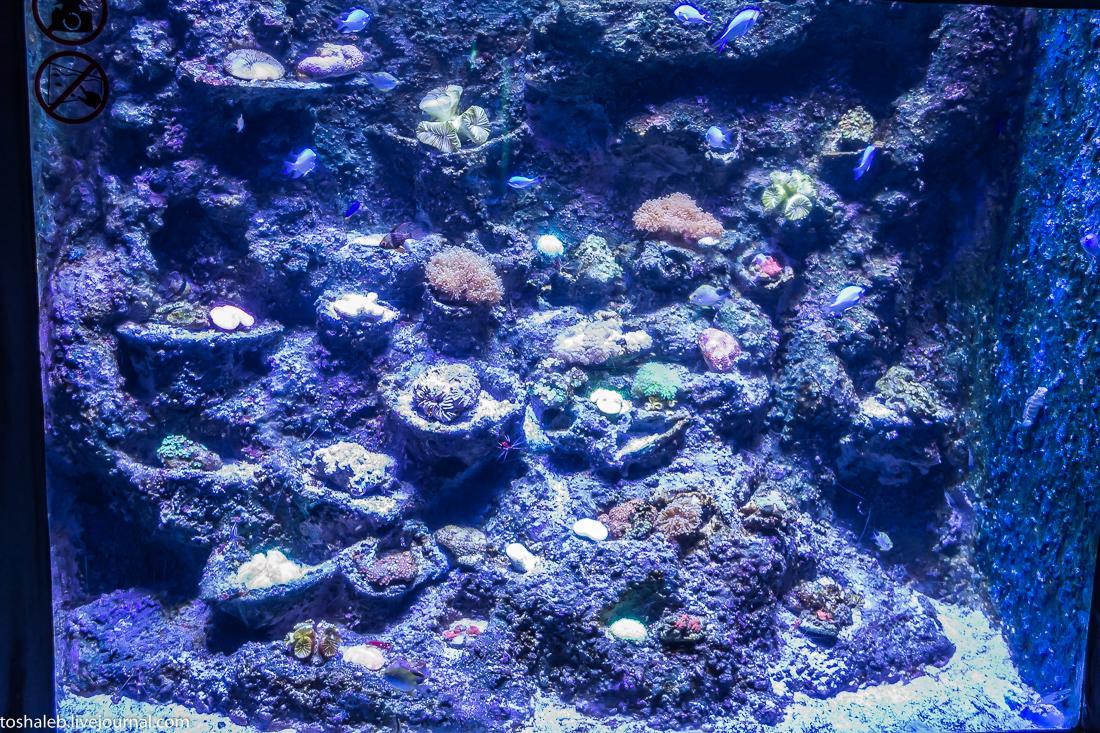 Анталья_аквариум-36