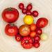 Ernte Balkonien Tomaten