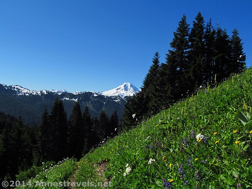 Mt. Baker is also visible from the Canyon Ridge Trail, Mt. Baker-Snoqualmie National Forest, Washington