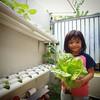 Yasmine dan #selada, #hydroponic , #hidroponik , #lettuce, #growyourfood , #healtyfood, #berkebun , #berkebunyuk ,