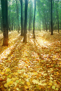 Moldova Forest