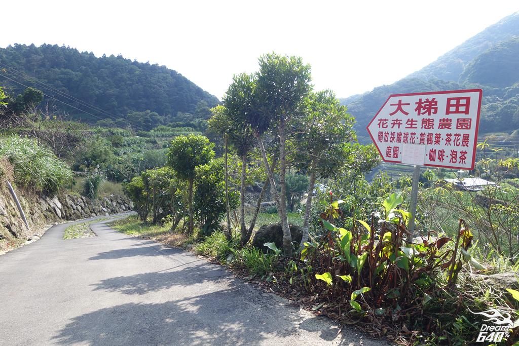竹子湖青楓步道02