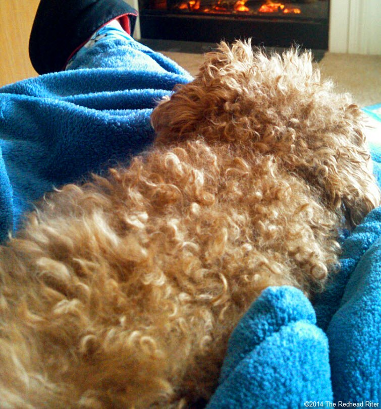 Surgery Is Not Fun For Anyone - Toy Poodle Spayed laying down fireplace