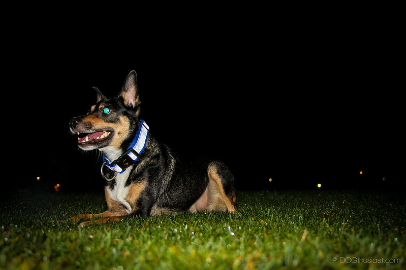 Reflective dog collar keeps your dog safe while walking at night.