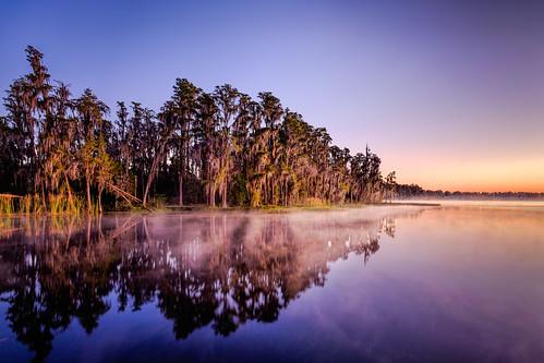 sky usa mist lake plant reflection tree reed water fog sunrise landscape dawn florida clermont centralflorida lakelouisastatepark edrosack assignmanet1 modernmonochromecourseatcrealde