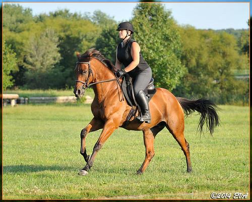 Summertime gallop