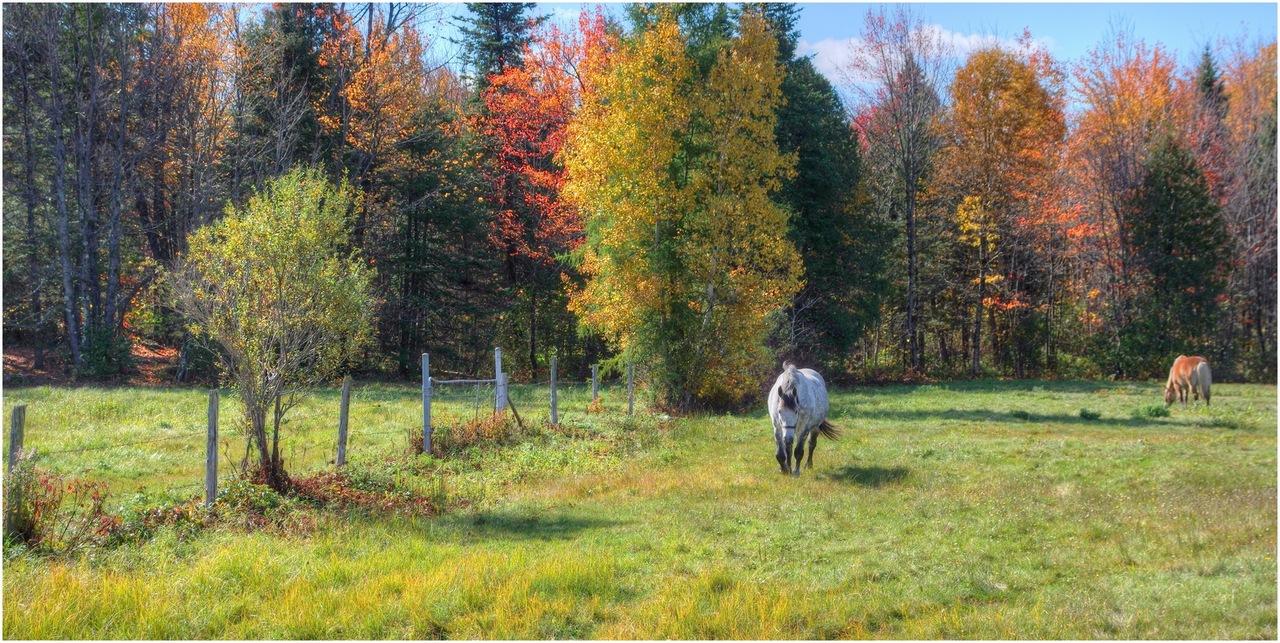 Animaux de la ferme / Chevaux - Page 4 15717786596_ed05ab7bb1_o