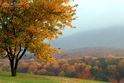 autumn autumnfoliage virginia fallcolors autumncolors foliage shenandoahvalley ruralvirginia massanuttenmountain
