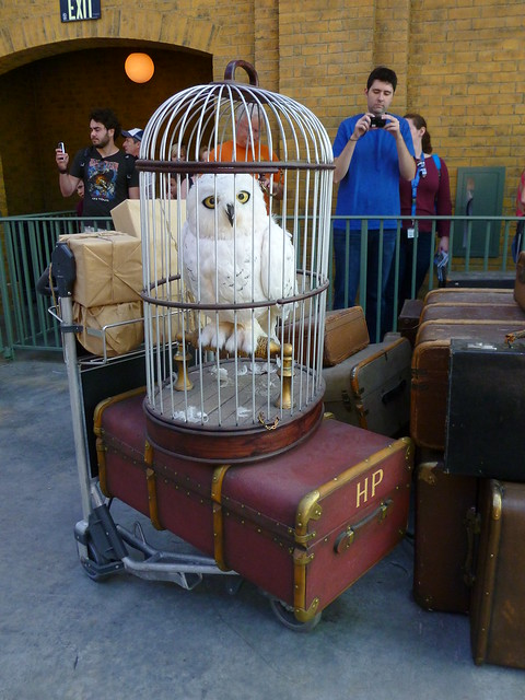 a certain someone's luggage and owl in the train station