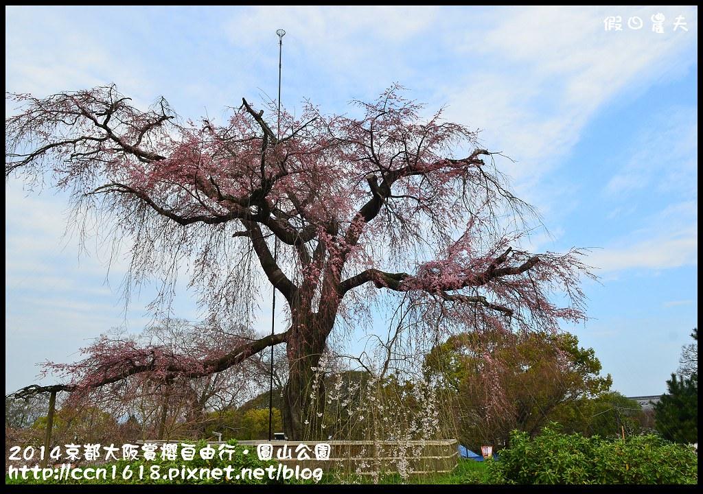 2014京都大阪賞櫻自由行.圓山公園DSC_9945