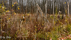 Wetland at Girdled Road Reservation