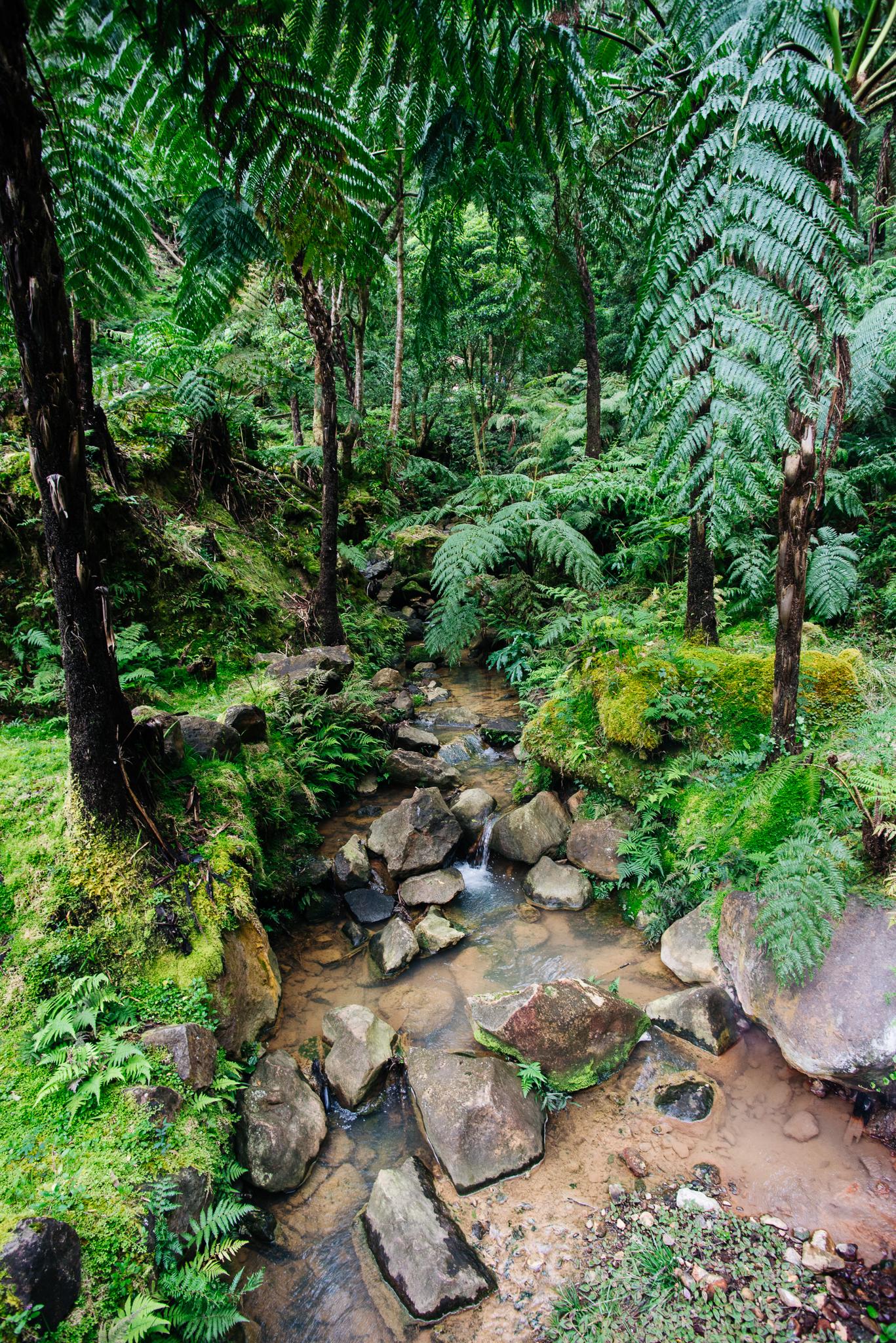 Caldeira Velha park növényzete