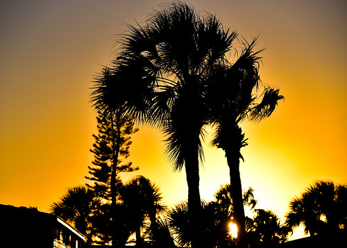 melbournebeach florida unitedstates us sunset through palm trees melbourne beach fl fla atlantic ocean bay cove river indian creek branch water tree palms