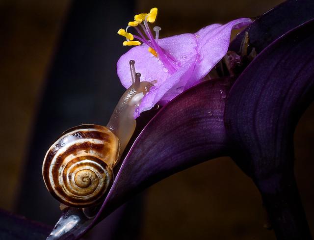 Snail, Nikon D750, AF Micro-Nikkor 105mm f/2.8