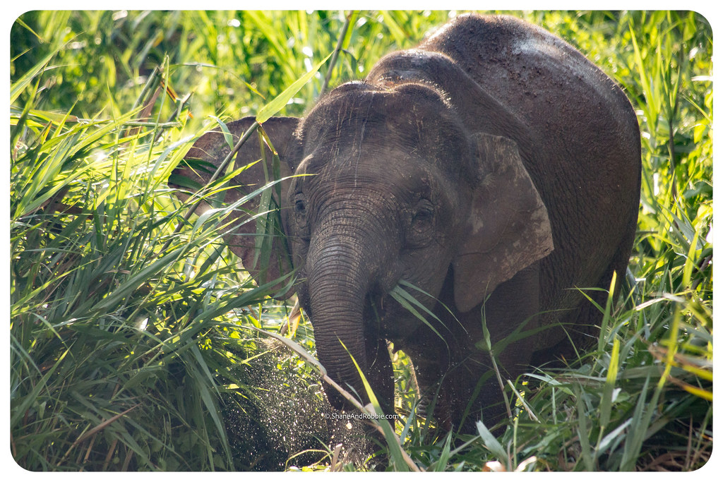 Borneo-20170410-IMG_7305