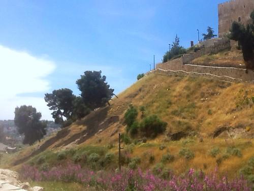 tree israel jerusalem valley adobelightroom jewishtemple