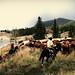 Nicetomeatyou_cowboy