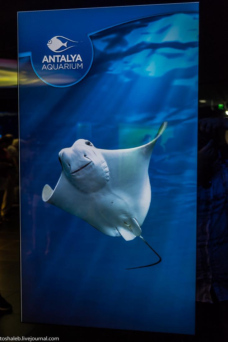 Анталья_аквариум-51