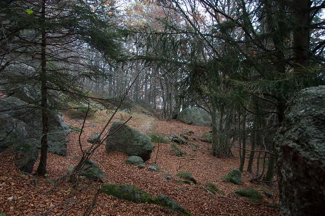Il bosco d'autunno