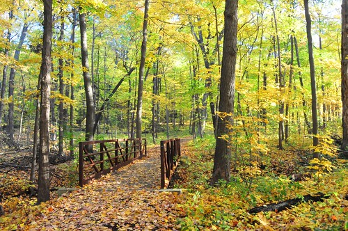 bridge autumn trees light fall nature leaves yellow forest maple woods footbridge path walk hike mortonarboretum