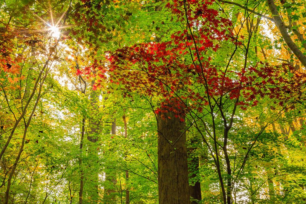 Sunlight through foliage [Flickr]