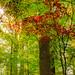Sunlight through foliage