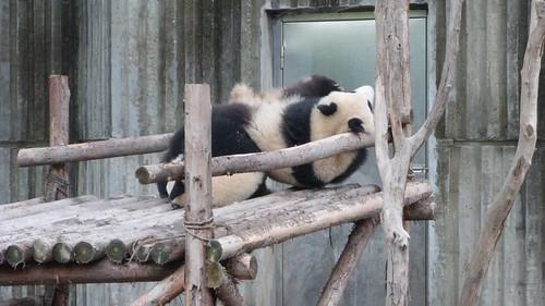Chengdu-Teil-2-048