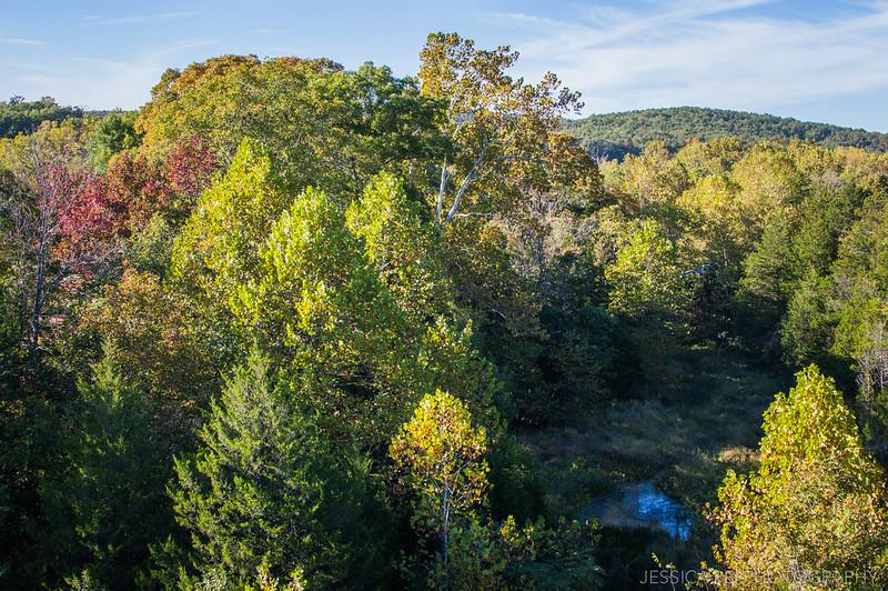 fall trees colors autumn