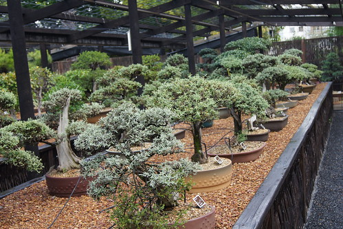 The Western Cape Bonsai Heritage Collection, Stellenbosch, South Africa