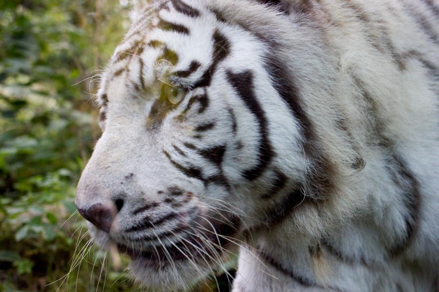 dierentuinamersfoort (5 of 8)