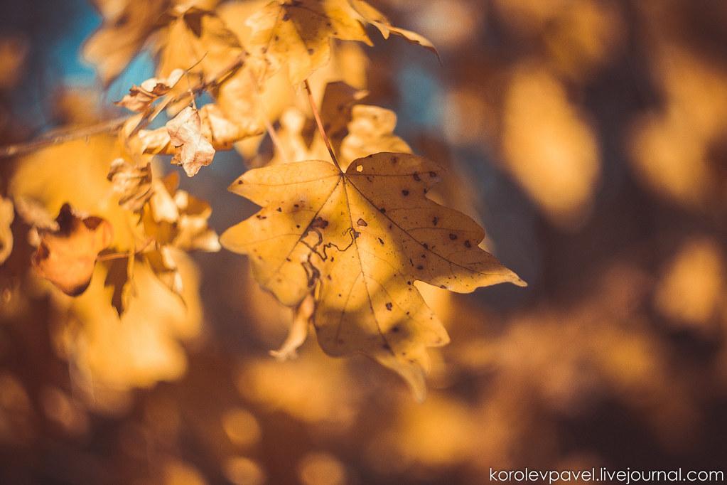 Autumn-094