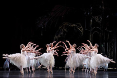 Corps de ballet in The Royal Ballet's Swan Lake