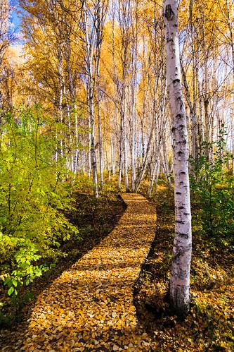autumn alaska fairbanks creamersfieldmigratorywaterfowlrefuge