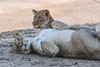 Wildlife in South Luangwa National Park