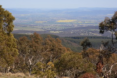 mt canobolas photo