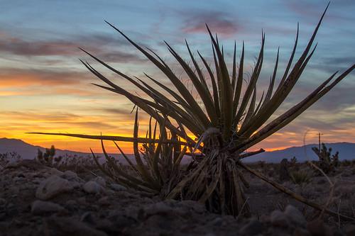 sunset cactus sky mountain desert lasvegas nevada pahrump