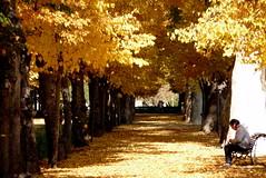 Los colores de otros otoños