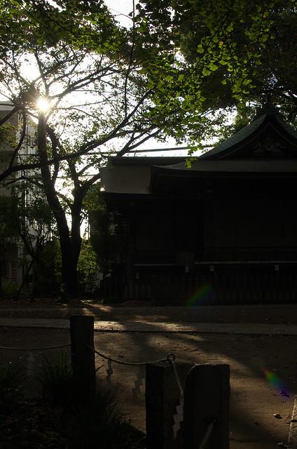 東京路地裏散歩 諏方神社境内にて 2014年11月3日