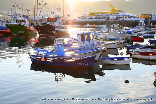 Morning in Los Cristianos harbour
