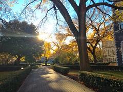 Fall at Fordham
