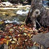#Fall. #Hiawassee #iphoneography