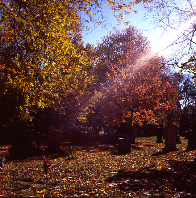 Fall colours, from my first home-develped roll of slide film!