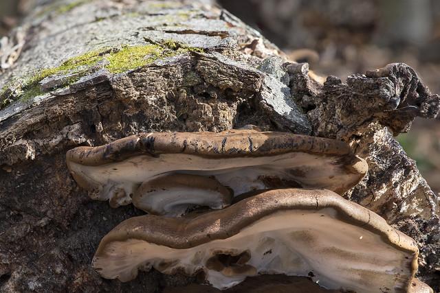 Mushrooms and BUGS